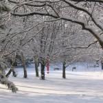 Niendorf-Nord im Winter 02, Foto: Peter Romhardt