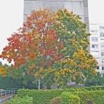 Baum Foto: WS 100_4382a