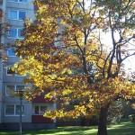 Herbstsonne Foto: WS 100_4425a