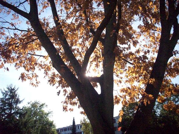Herbst Foto: 100_4457a