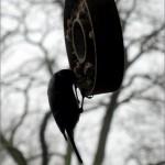 Noch wollen die Vögel gefütert werden