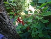Blumenmeer00100