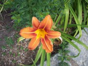 Blumenmeer0020