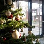 Tannenbaum / Weihnachtszeit im Nachbarhaus in Niendorf-Nord