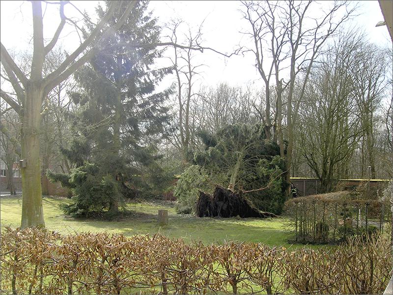 blowing in the wind / Sturm in Niendorf-Nord